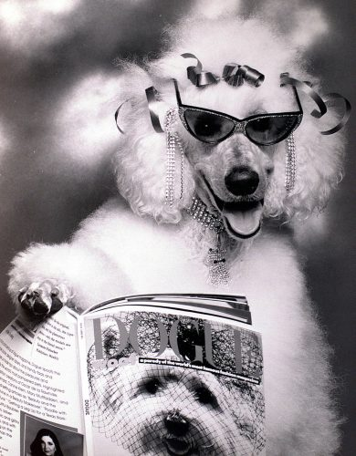 Poodle dog reading Dogue Magazine 1988