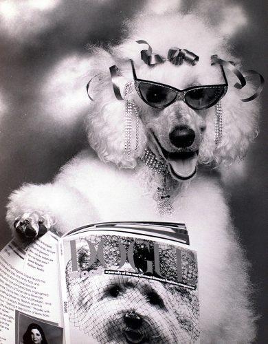 Poodle dog reading Dogue Magazine 1988