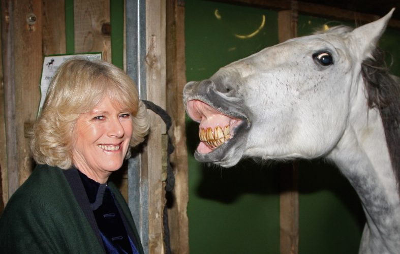 The Duchess of Cornwall Attends The Olympia Horse Show