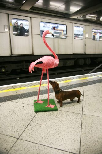 Flingo from The Adventures of a Flamingo in London