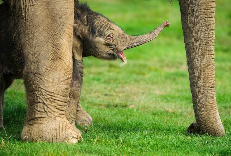 Baby Elephant at Whipsnade