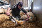 Lambing Season 2021 - Joann Randles