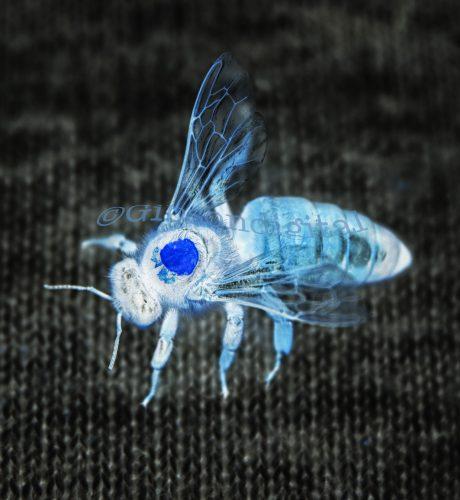 Neon Bee