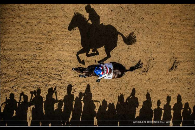 OLYMPIC-HORSE-SHADOW-1