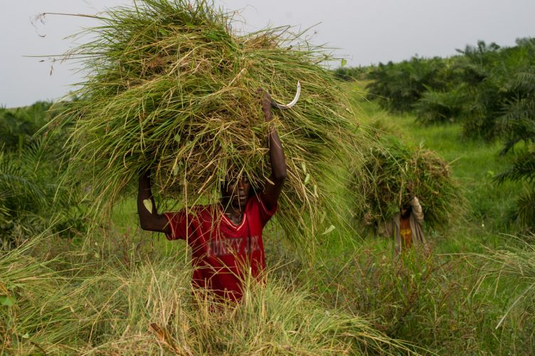 Agriculture, Burundi