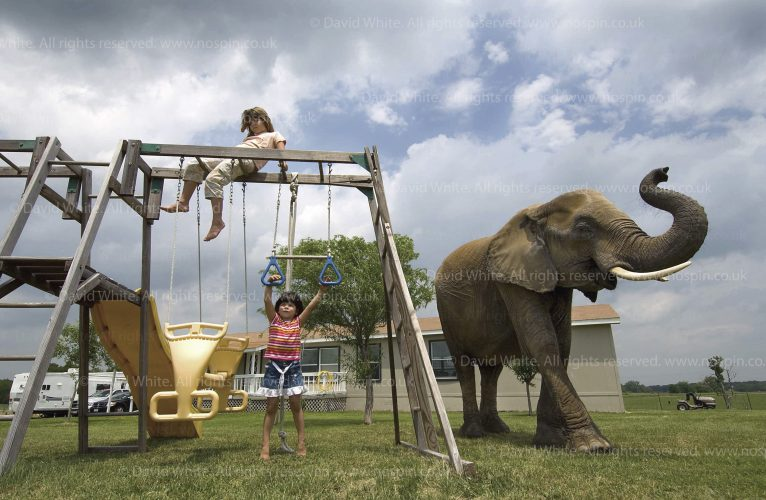 Exotic pets USA.  Taylar (5) & Alex (8) Terranova, on the swings with elephant, Texas, USA. For Marie Claire magazine.