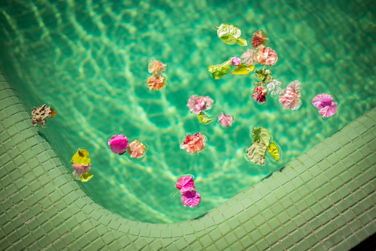 Pink Petals in the Pool