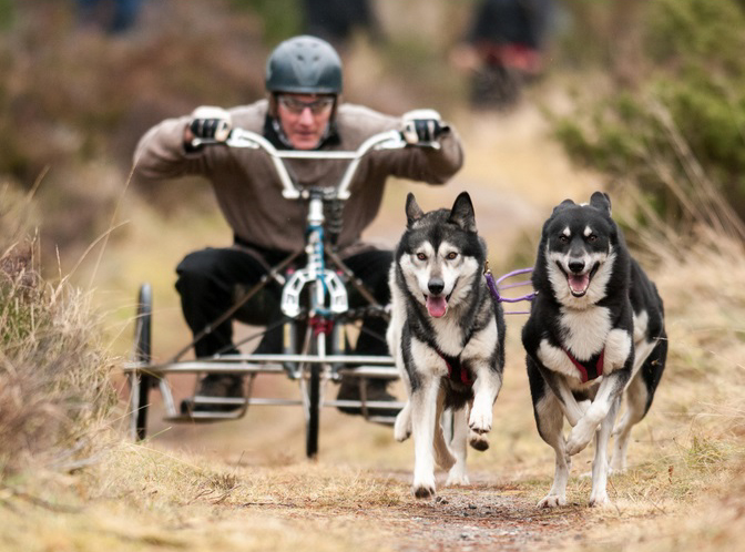 Husky racing in Aviemore