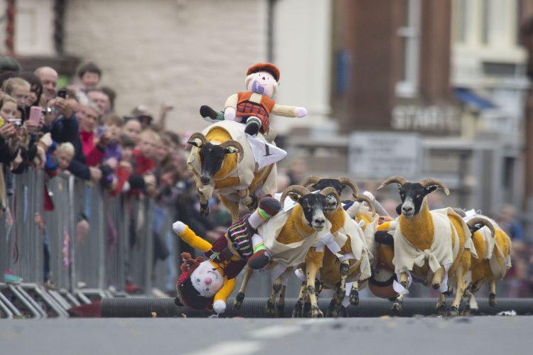 Sheep_Race_17