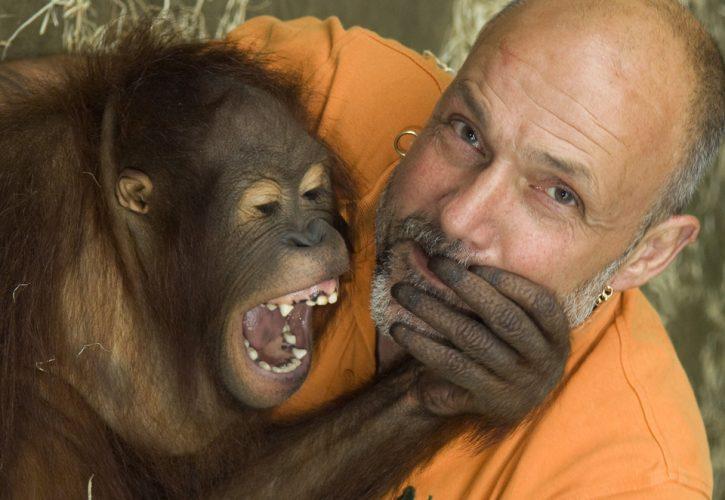 Jeremy Keeling, co-founder of Monkey World, with jouvenile Orange Utang