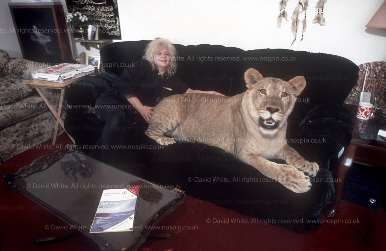 EXOTIC PETS USA.Anna  Studer with Shahzarah (means queen of queens) in her Tell City, Indiana  home. The lioness is still young, at 14 months old. Pictured in their living room, where it has the run of the house…For M magazine.